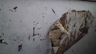 シロアリってゴキブリの仲間らしいですよ。知ってました?