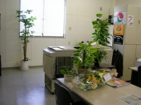 観葉植物04